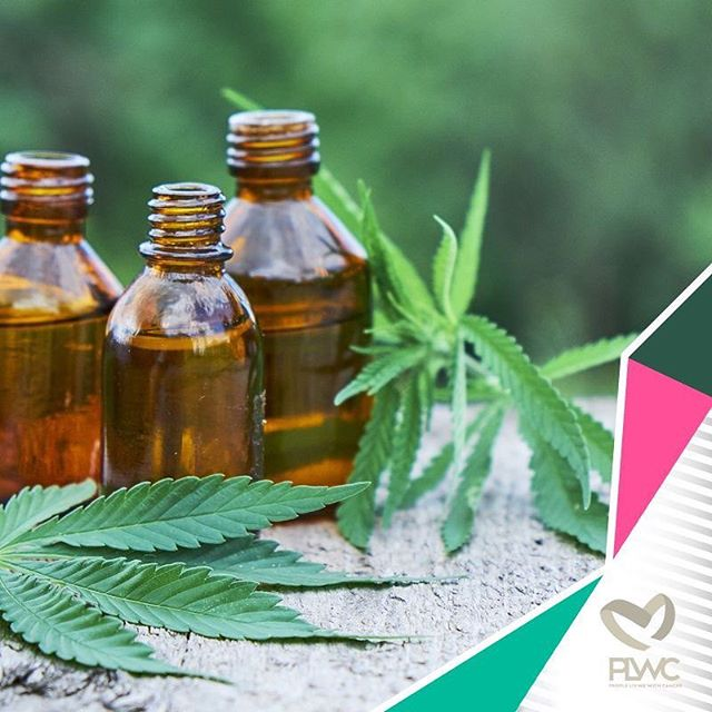 At PLWC, we are dedicated to bringing you the best quality and guidance so that you can enjoy life's greatest wealth, which is health 🤗  Check out our state-of-the-art range of 100% natural wellness supplements, including Moringa and CBD products, on our website - link in our bio 💚  With our extensiv range of natural supplements, maintaining optimal health has never been easier!  #Wellness #YouWillNeverBeAlone #CancerAwareness #CancerEducation