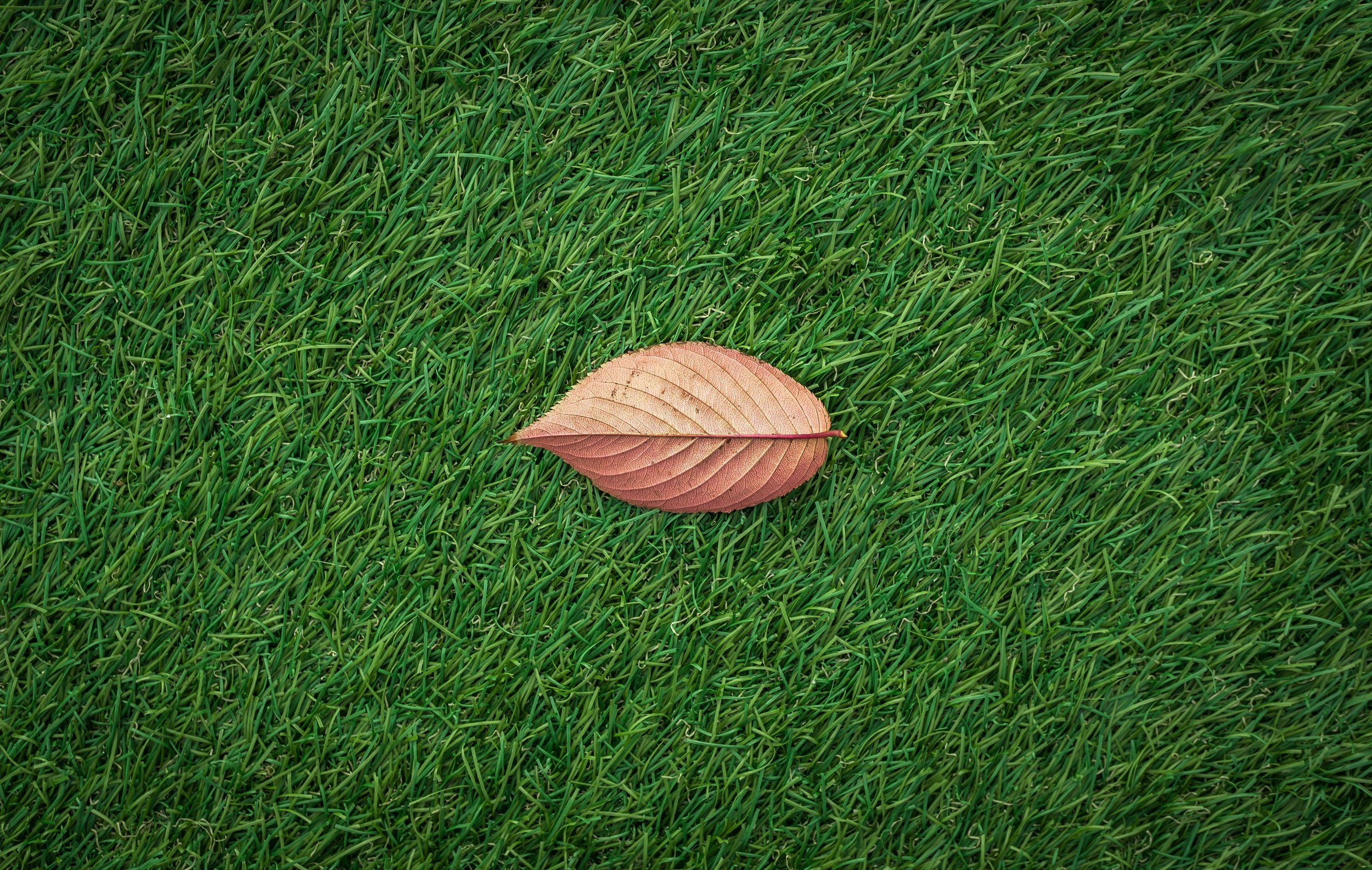 Grass with leaf.jpg