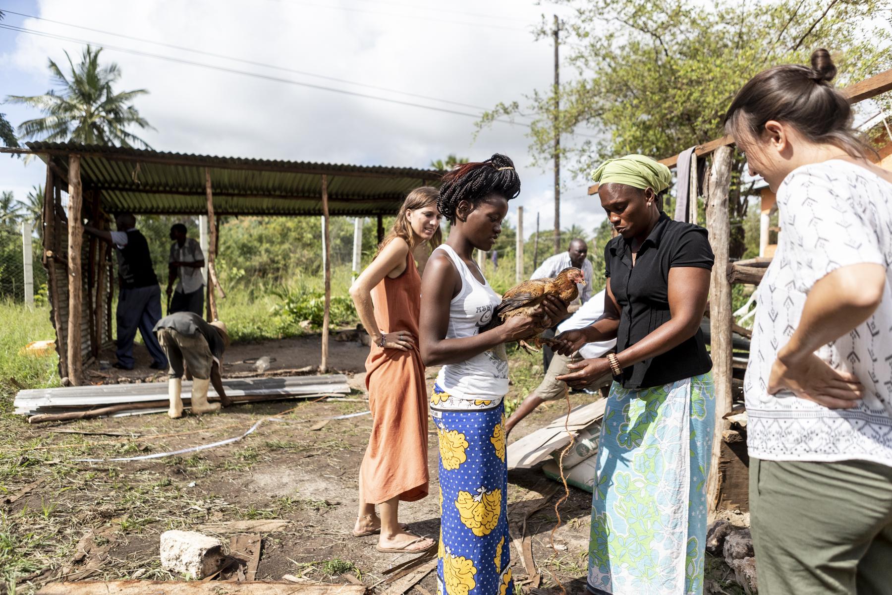 Alle helfen mit: die Frauen retten die Eier und Hühner, die Männer demontieren die Hütte.