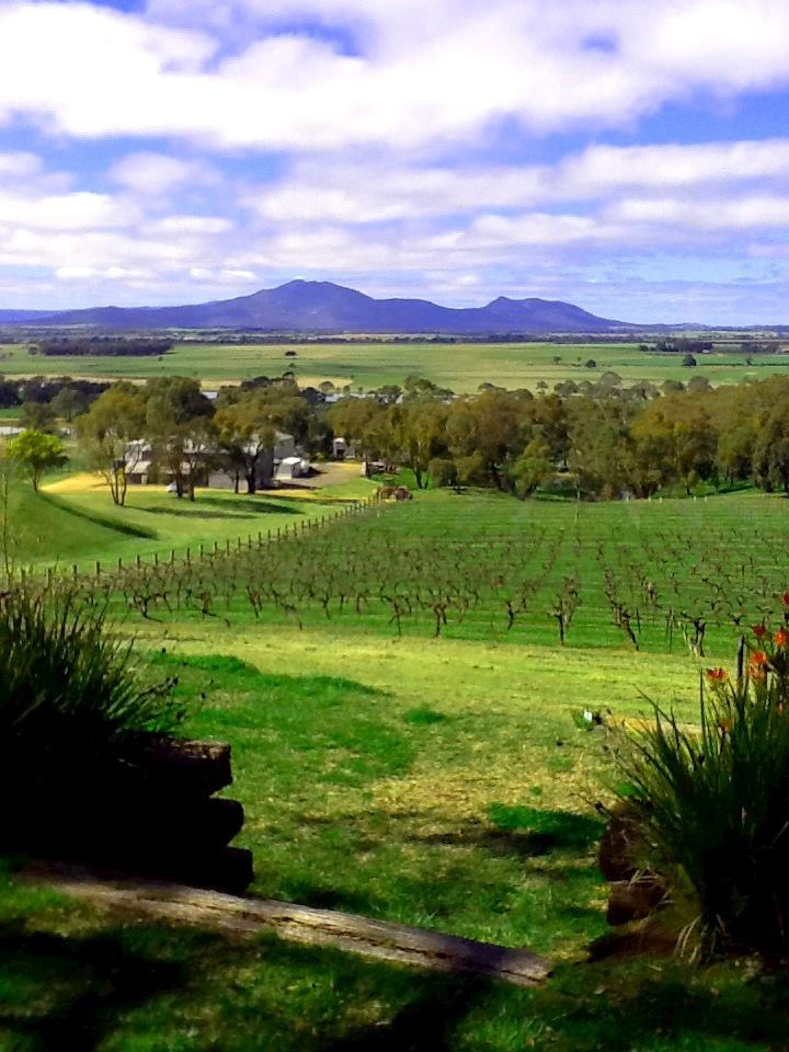 A vineyard in Victoria attempting to rebuild after the drought.