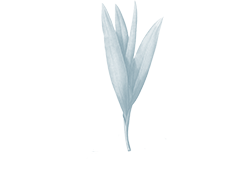 Modern Holistic Logo