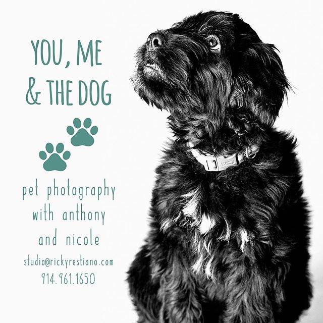 "Have you ever tried to take a picture of your pet with your phone? It's hard right? That's why @anthonypetrozza & @nicole_galante_ are teaming up to bring you ""You, Me & The Dog"". To kick off this new venture they will be having a photo contest - we want you guys to post a picture of your dog on Instagram with the hashtag #YouMeAndTheDog2018 and follow @youmeandthedogstudio. The two winners will receive a free pet portrait session. We will announce the winners on Friday, 1/26!"
