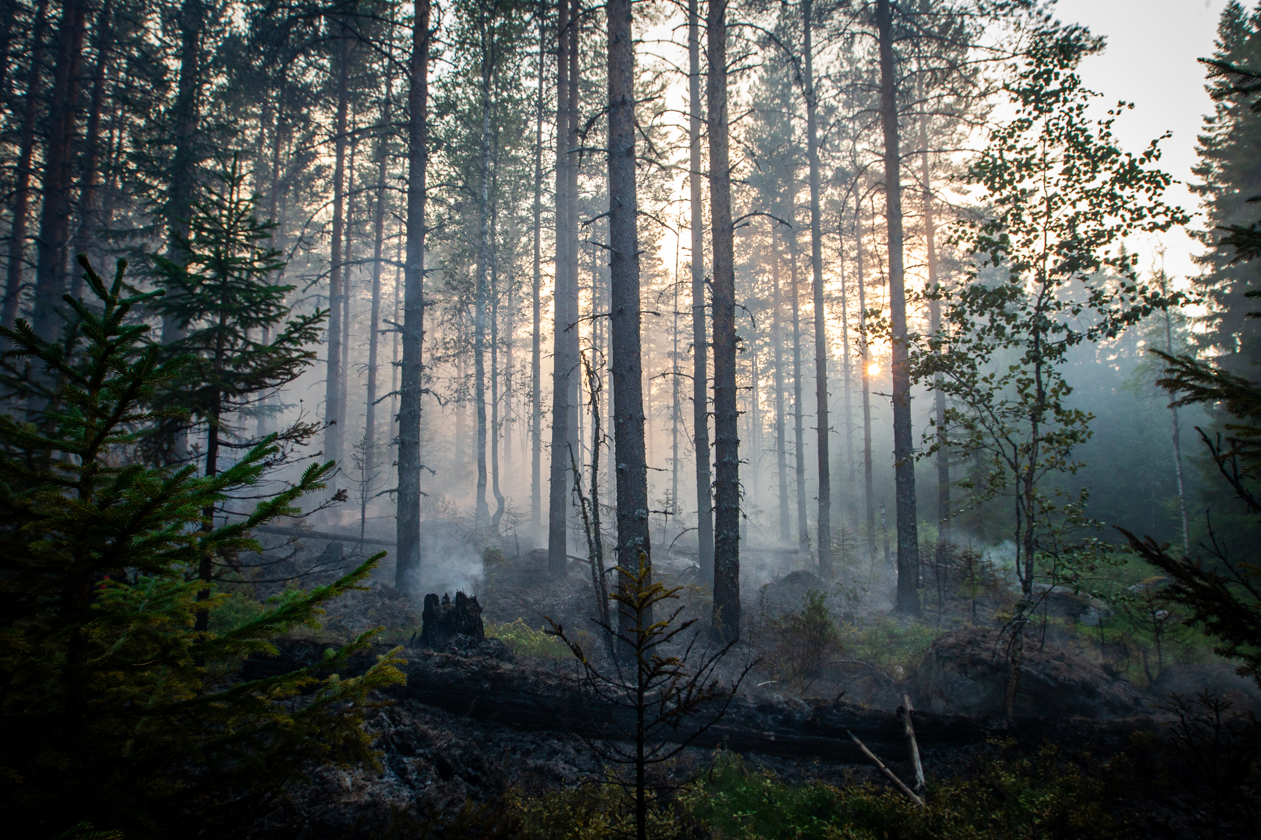 Evening falls over an area where a forest fire recently raged. Night means colder temperatures and less dramatic spread of the fire.