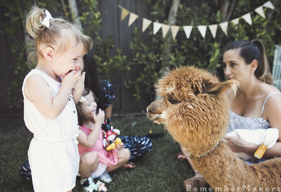 little horse on the prairie birthday party photography los angeles