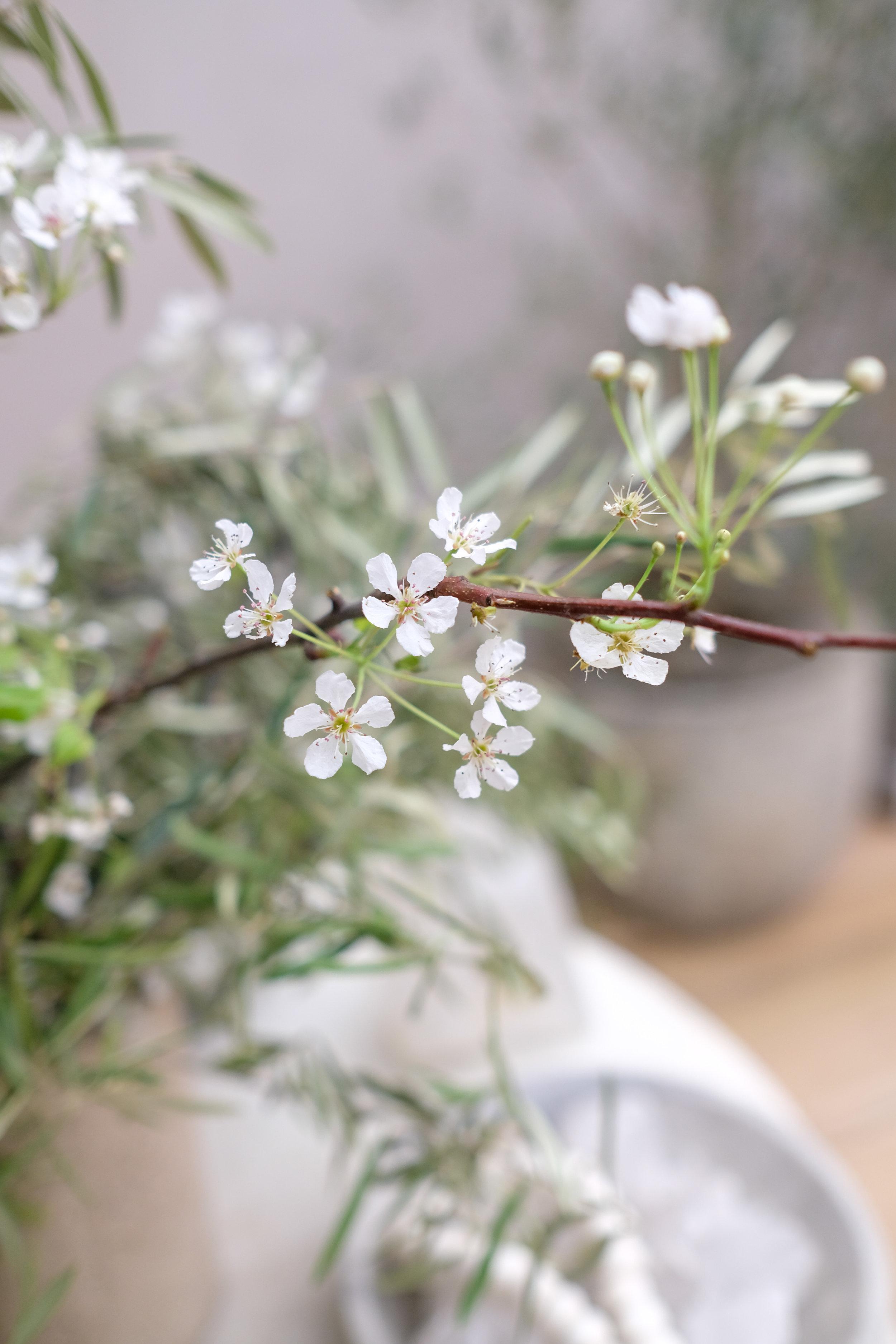 BloomSocial-TrueBotanicals-8.jpg