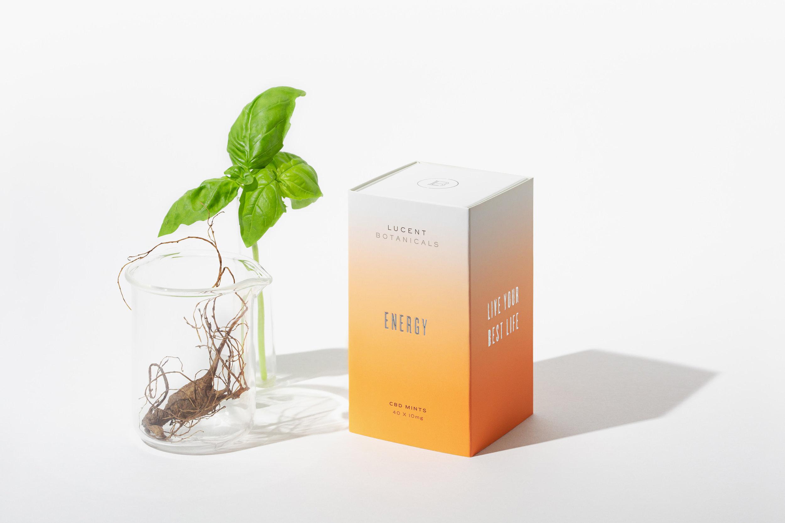 Madelene-Farin-Lucent-Botanicals-004.jpg