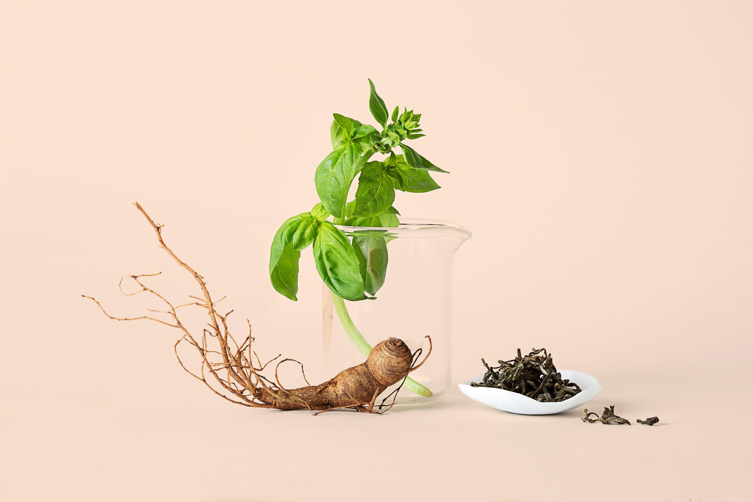 Madelene-Farin-Lucent-Botanicals-006.jpg