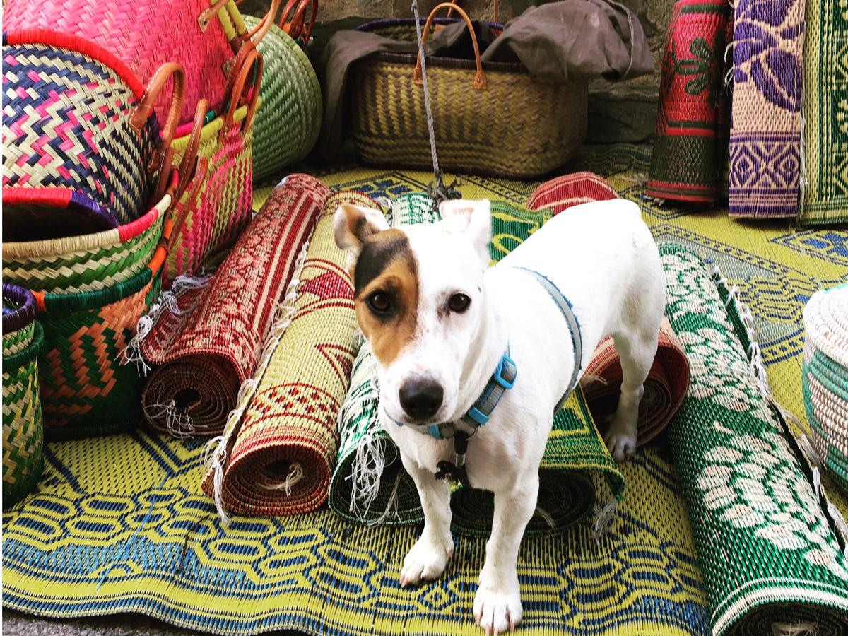 dog-market-banyuls.jpg