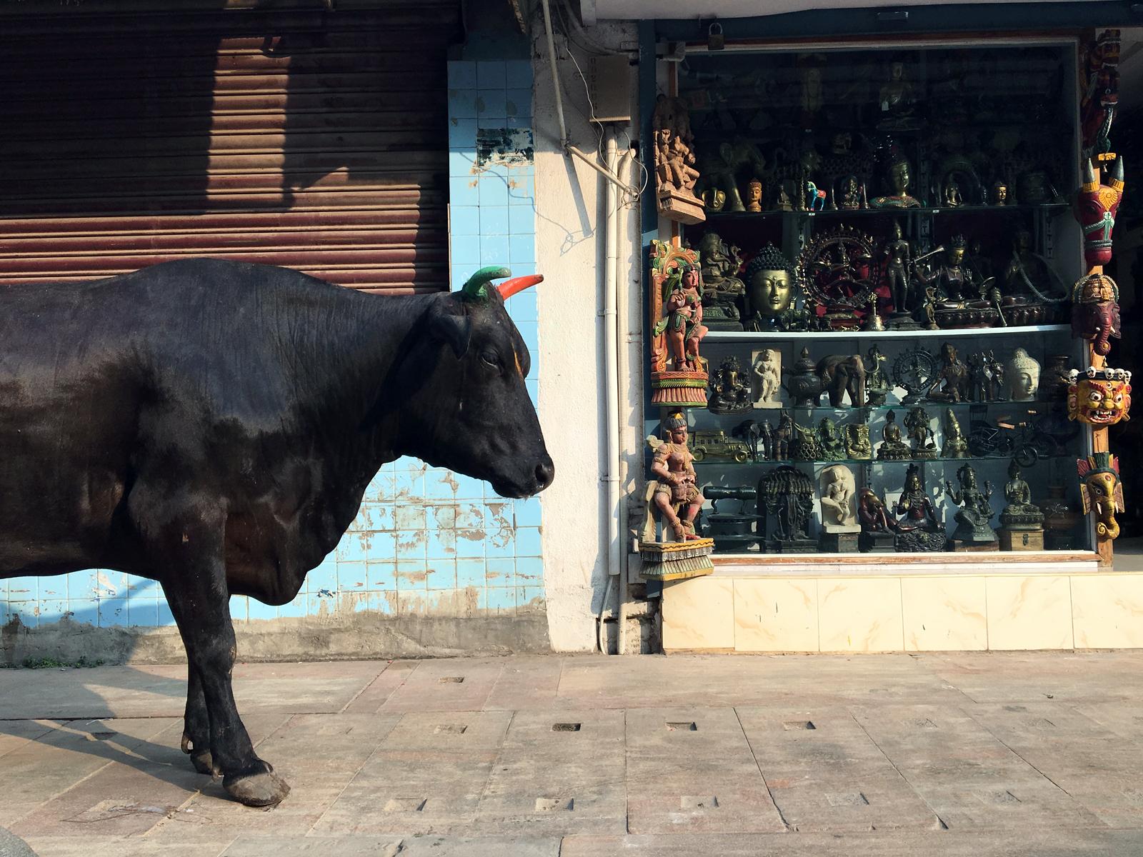 cow-madurai-souvenir-shop.jpg
