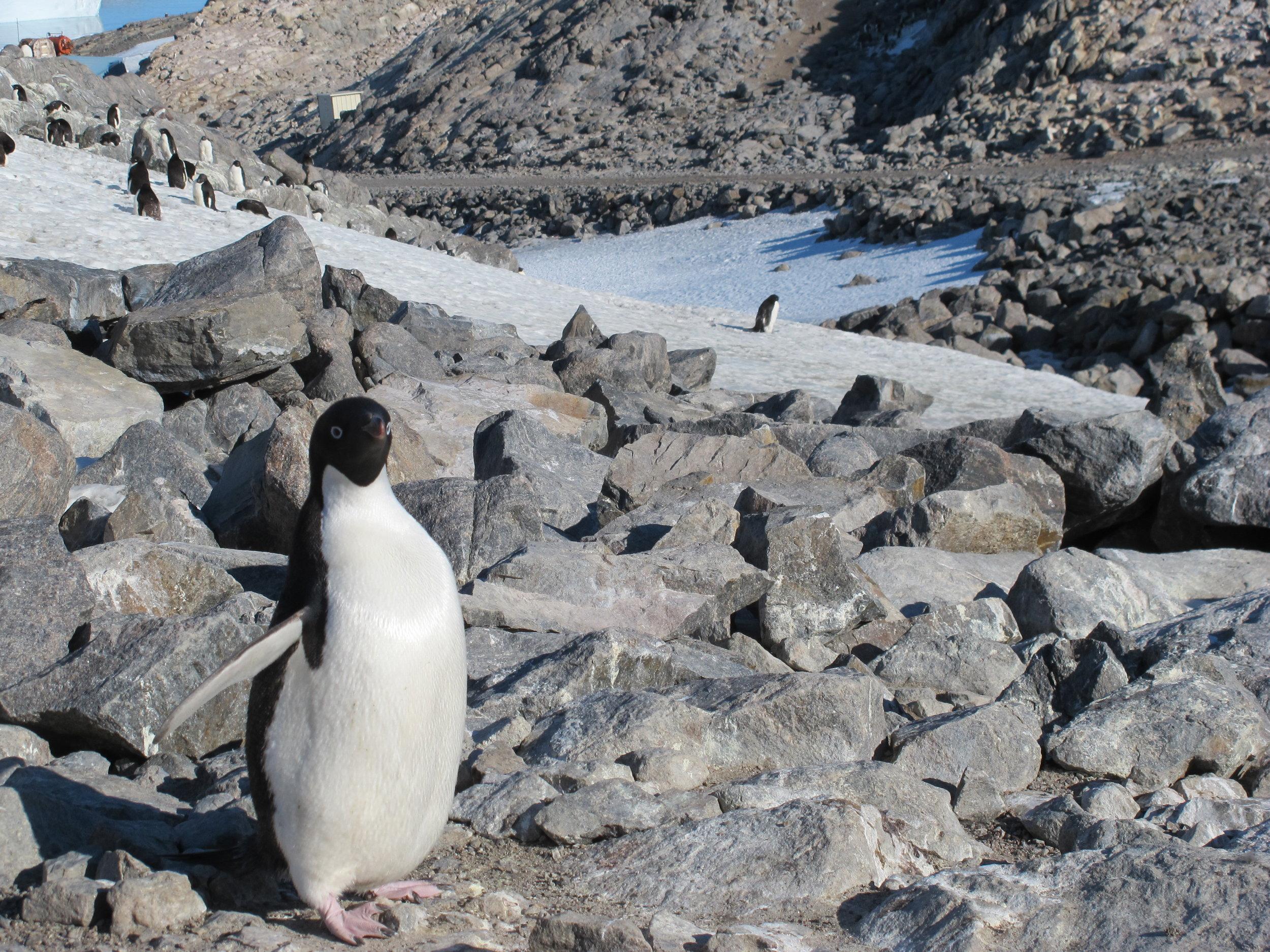 IMG_0911 - Penguin - Chrissie.jpg