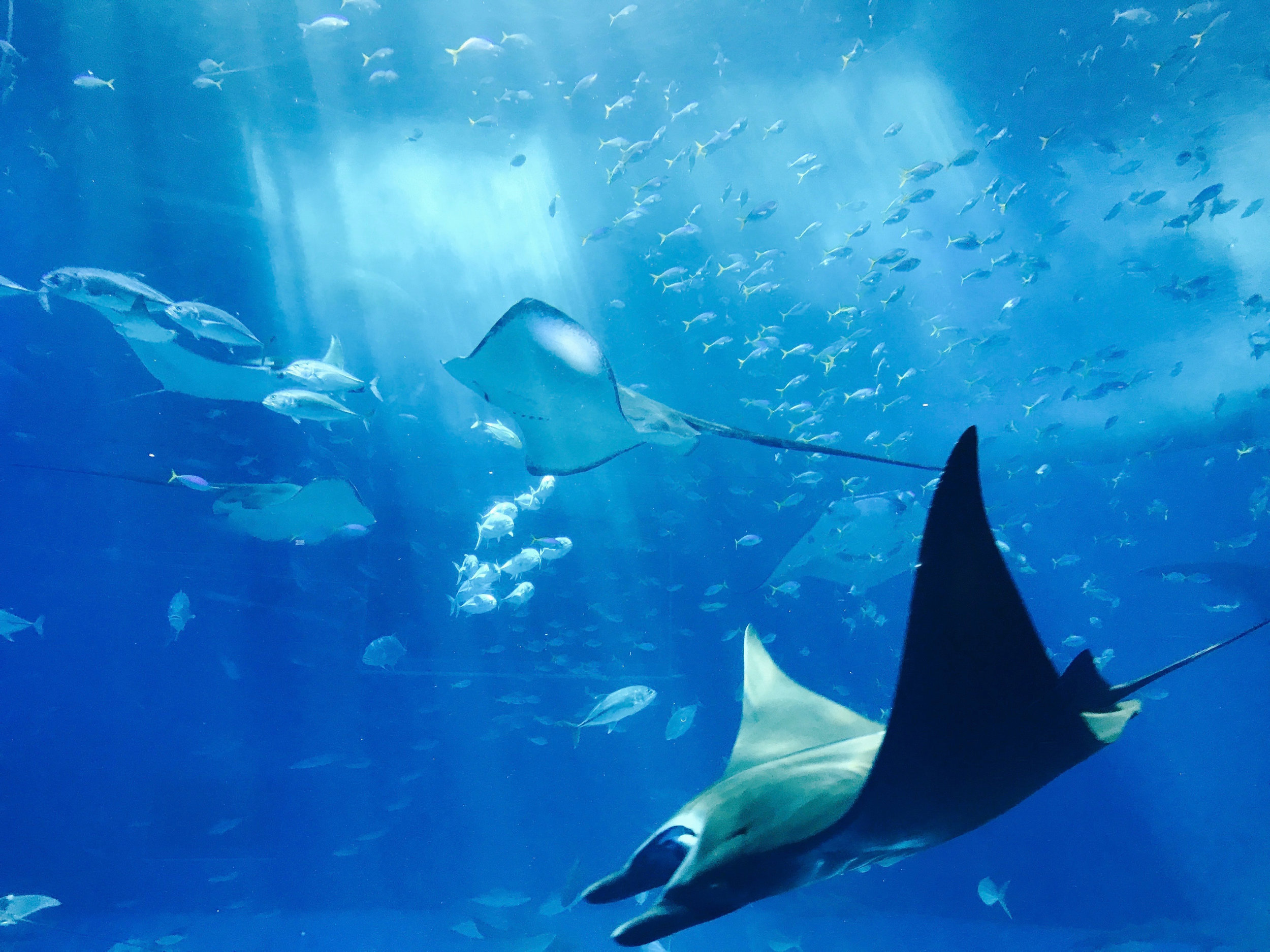 - NIGHTLY MANTA RAY TOURSSwim near a manta ray natural habitat on this night snorkeling tour from Kona.