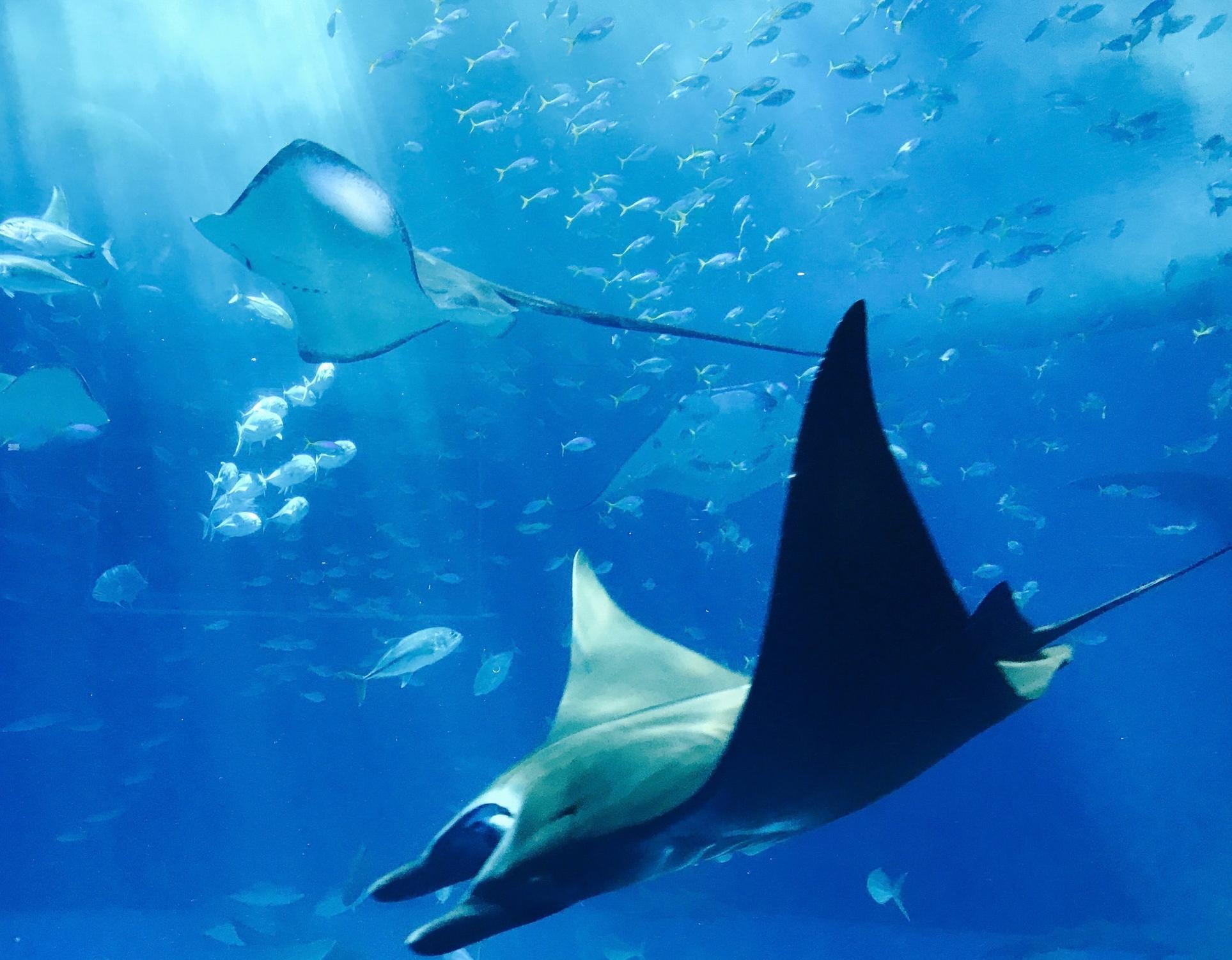 mobilechallenge-animals-aquarium-889929.jpg