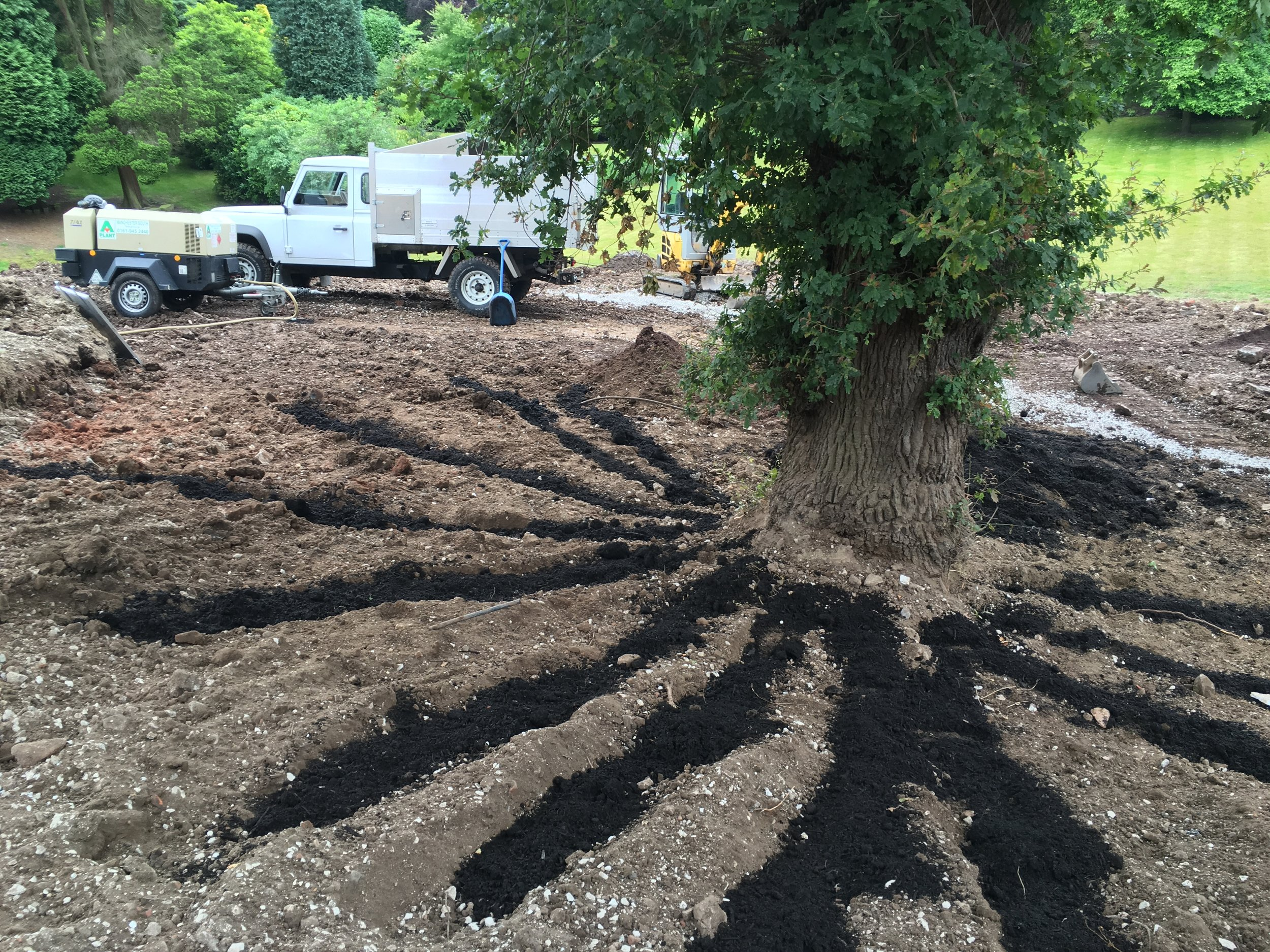 Radial trenching, which we undertook on an ailing oak in Cheshire, can be highly effective in improving soil conditions.