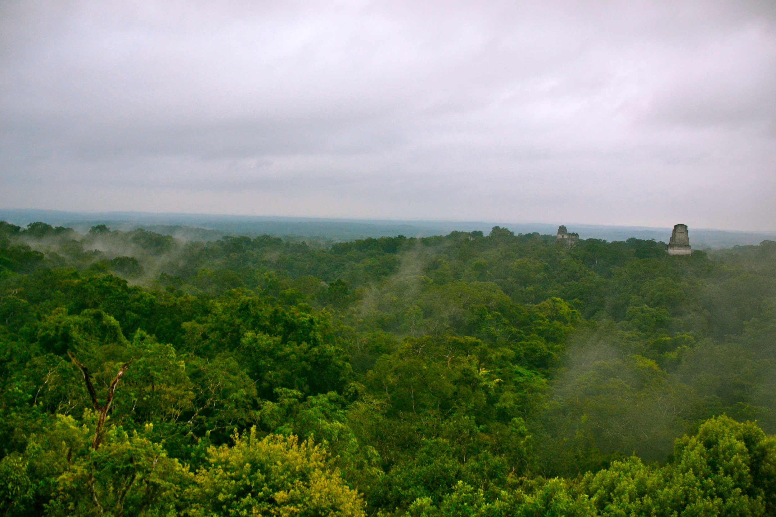 Tikal National Forest photo by Lucy Maynard