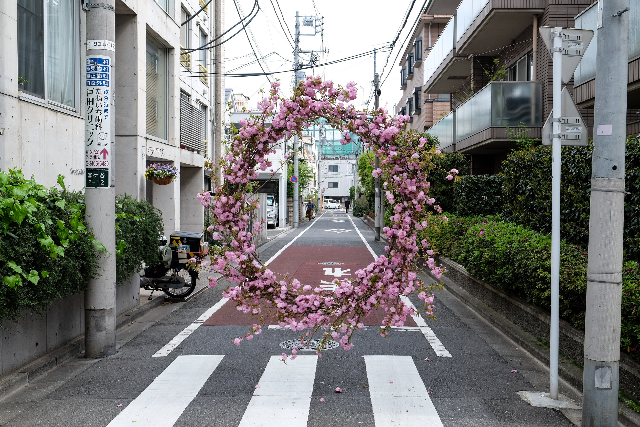 Loose Leaf_Hover Wreath_Cherry Blossom_Tokyo_2018_01.jpg