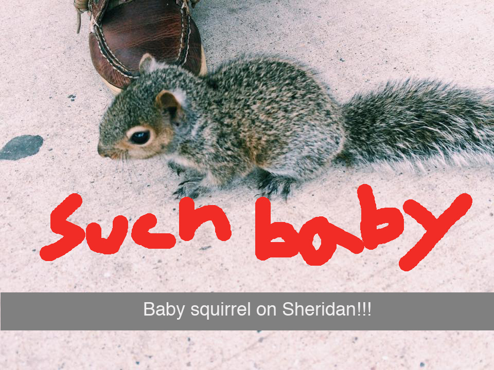 squirrel-snapchat.jpg