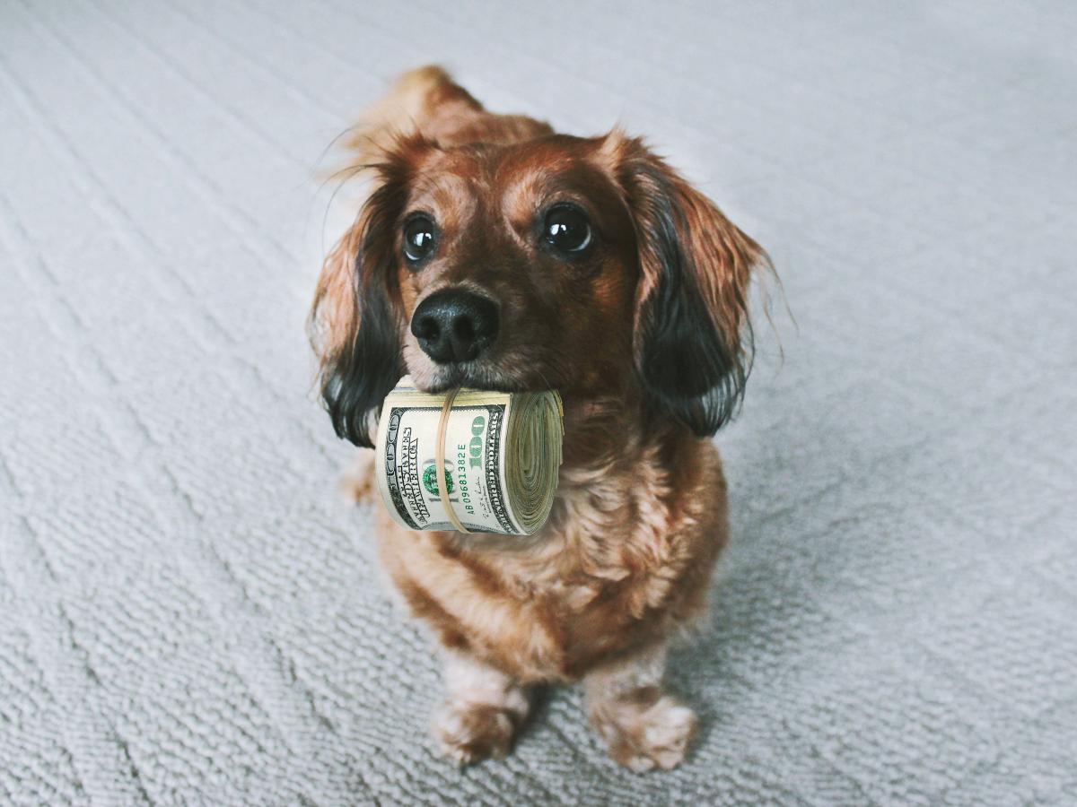 dog-money.jpg