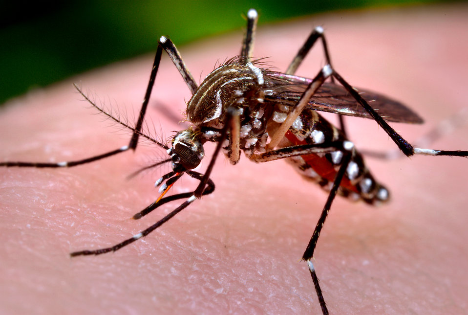16744-close-up-of-a-mosquito-feeding-on-blood-pv.jpg