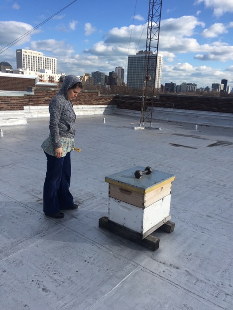 Ashley Gambill and her hive, on the roof of Chicago's Waldorf School.