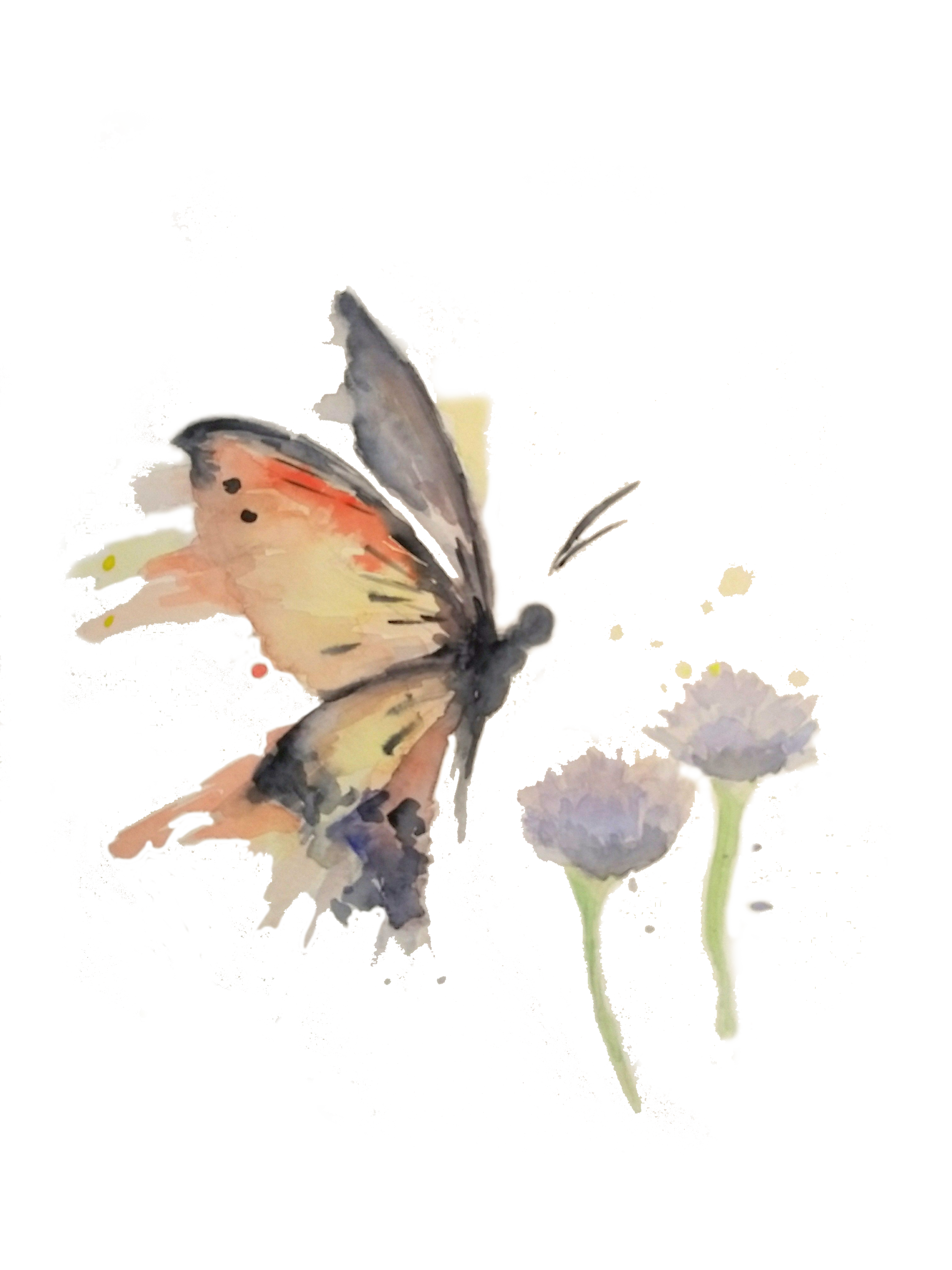 butterfly watercolor_.png