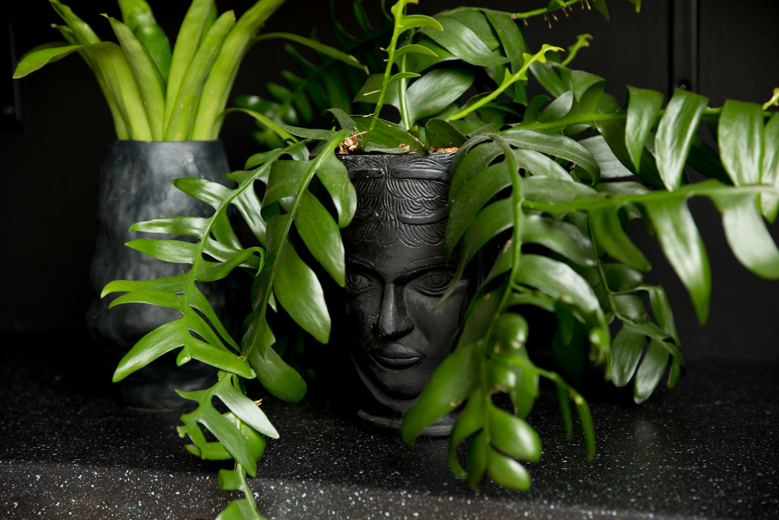 MO+ Plant Head.jpg