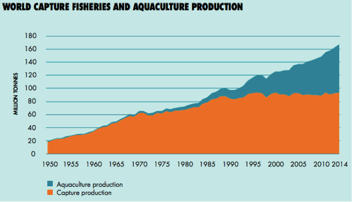 Production of aquaculture and capture fisheries over the past 64 years (Source: FAO 2016).