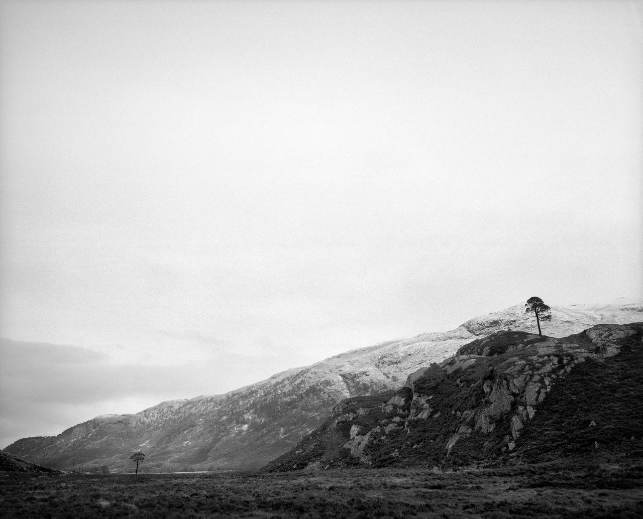 Two Granny Pines, Scotland 2017