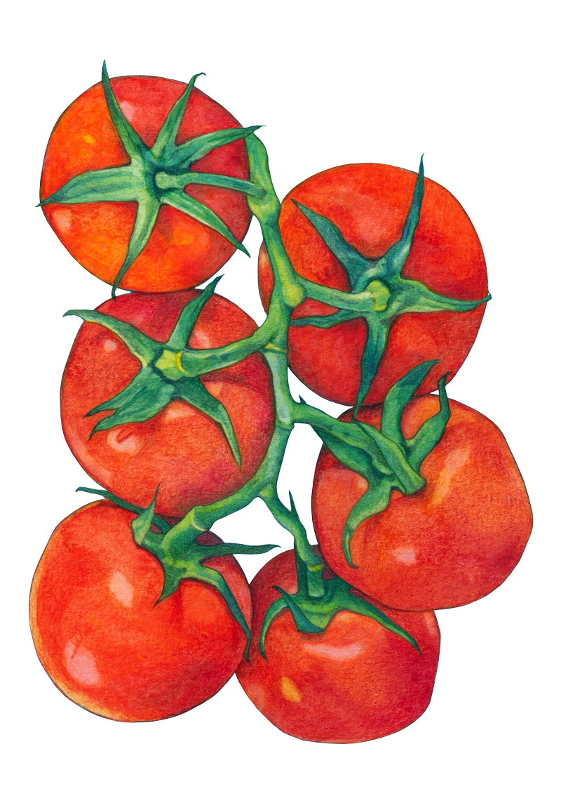 Red Tomatoes by Mariana:  Floating Lemons Art