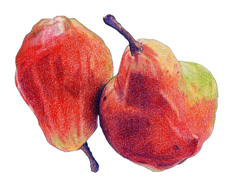 Two Red Pears by Mariana:  Floating Lemons Art