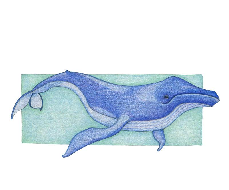 Whale by Mariana:  Floating Lemons Art