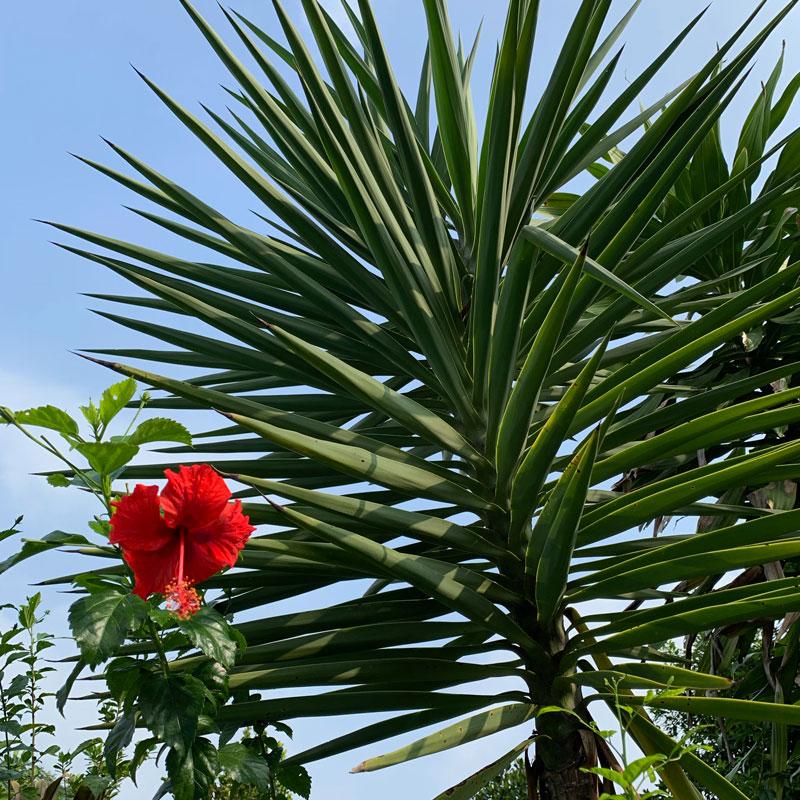 Tropical Garden - Hibiscus : FloatingLemonsArt