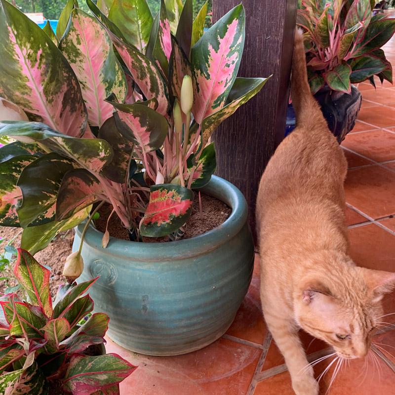 Tropical Garden - terracotta and cat : FloatingLemonsArt