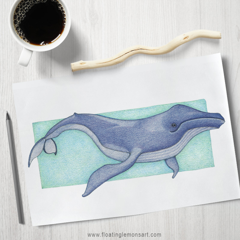 Whale coloured pencil illustration by Mariana:  Floating Lemons Art