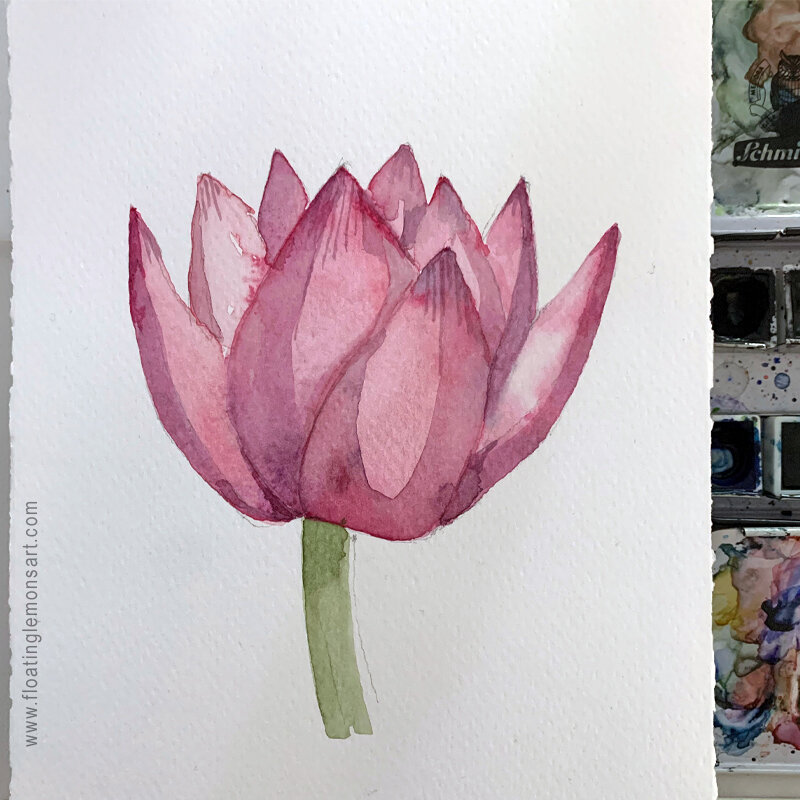 Watercolour: Which Lovely Lotus? by MarianaBlack:  floatinglemonsart.com