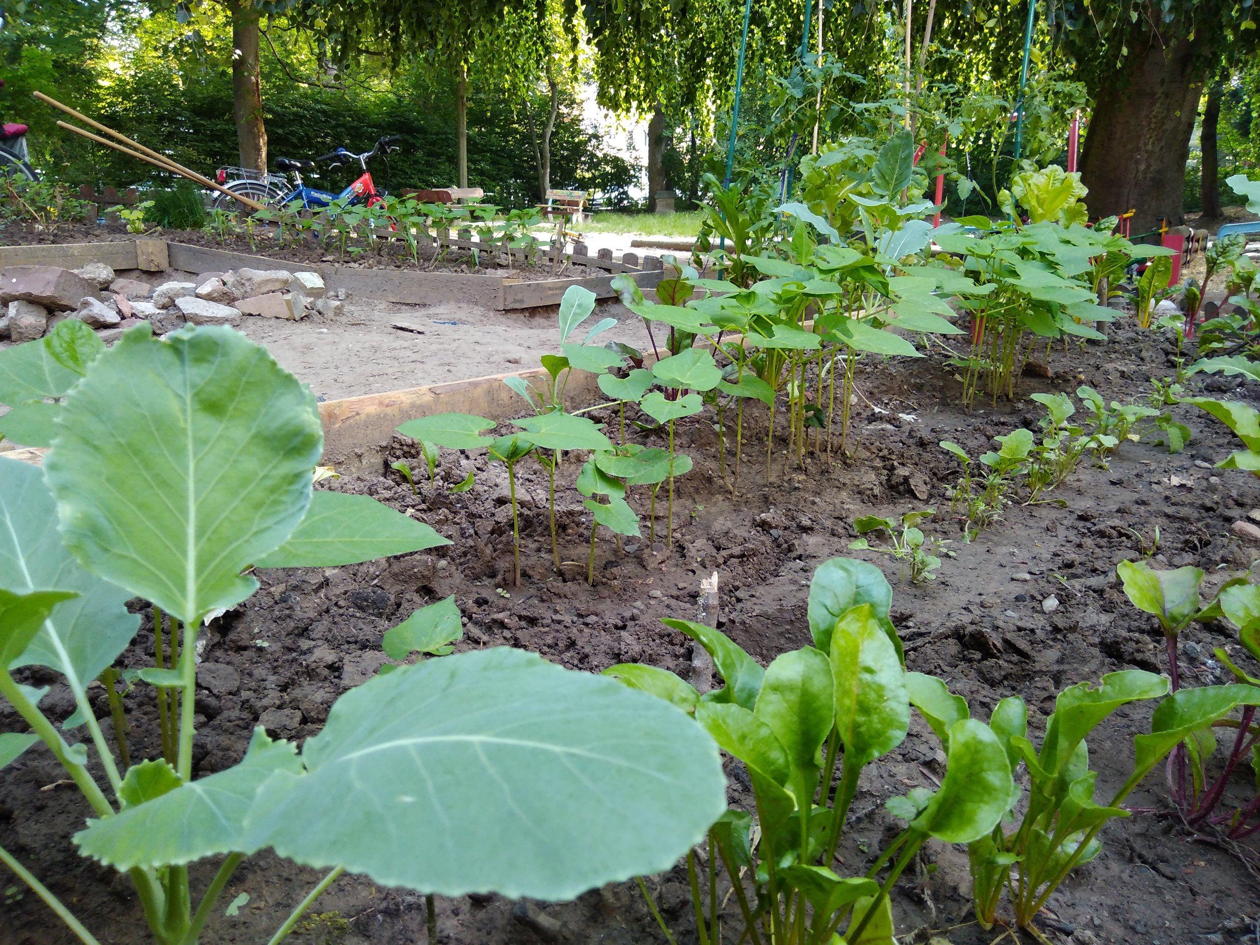Kindergarten - Garten.jpg