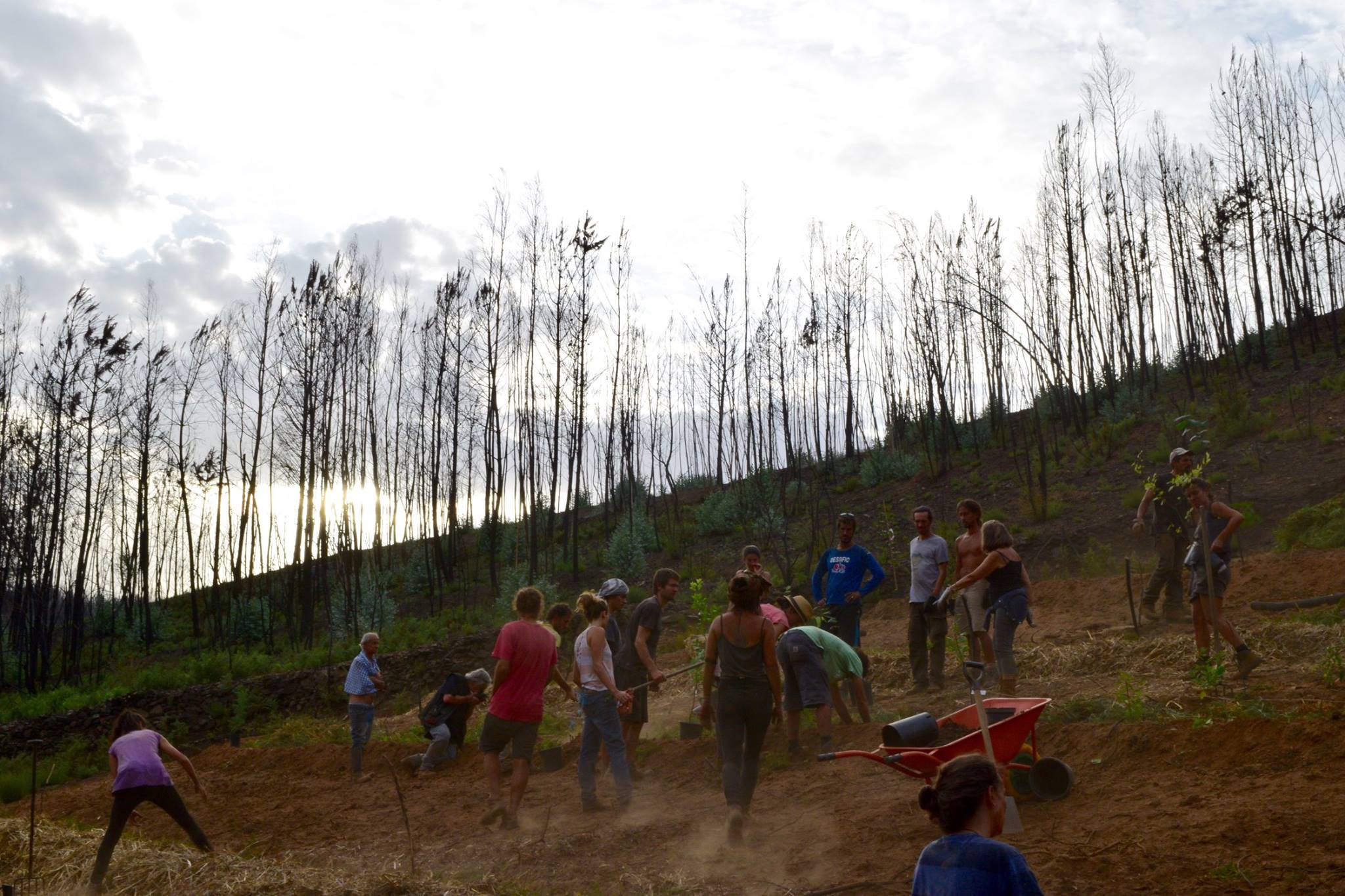 planting trees with volunteers.