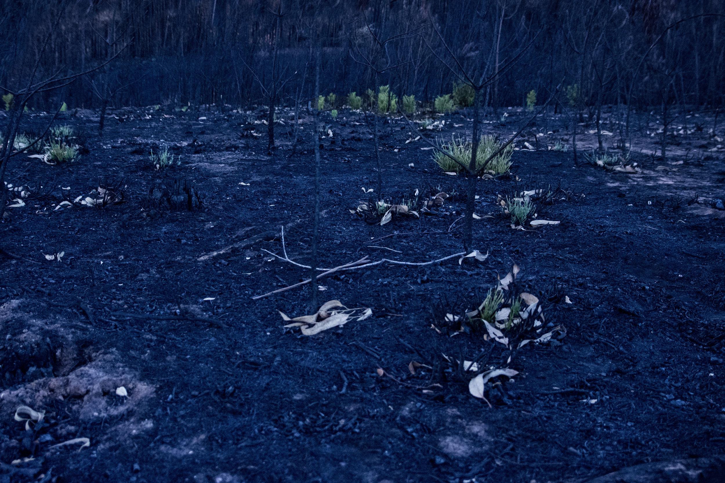 Floresta depois de um incêndio - realidade em Portugal.