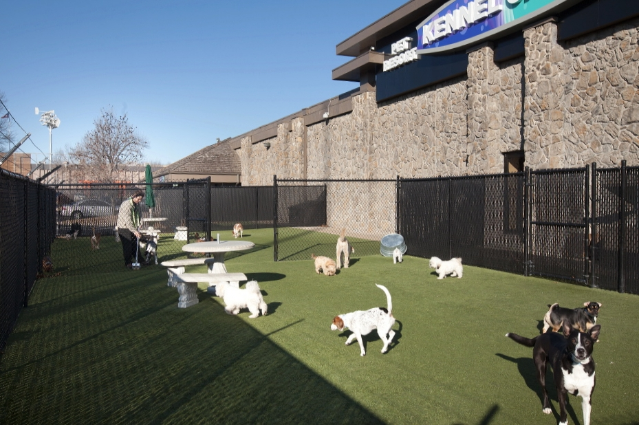 Outdoor Dog Park at Kennel Creek