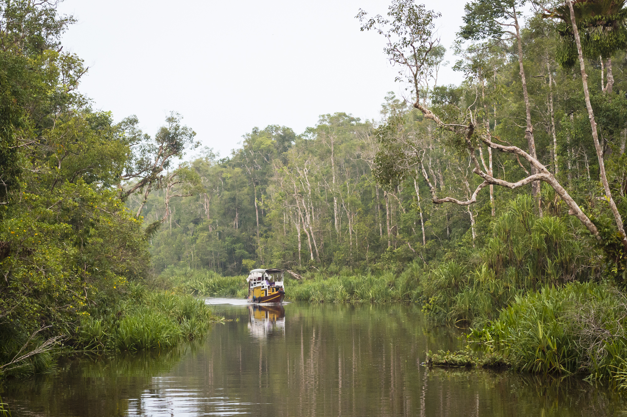 Home for the next week. - Heading down the Sekonyer River, deep into Tanjung Puting National Park, Borneo in search of wild orangoutangs.