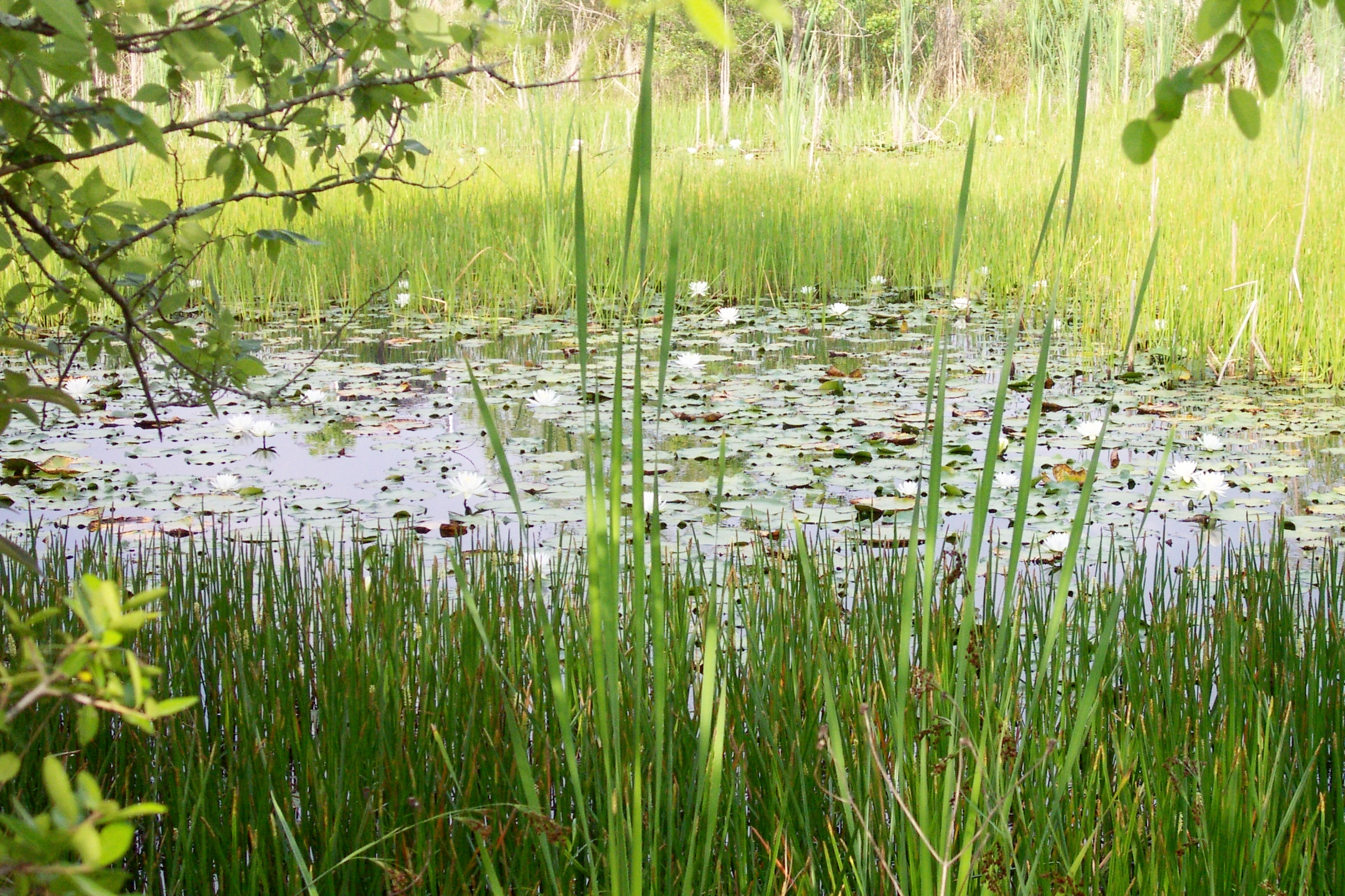 Wetland and Waters of the US Delineations/Determinations