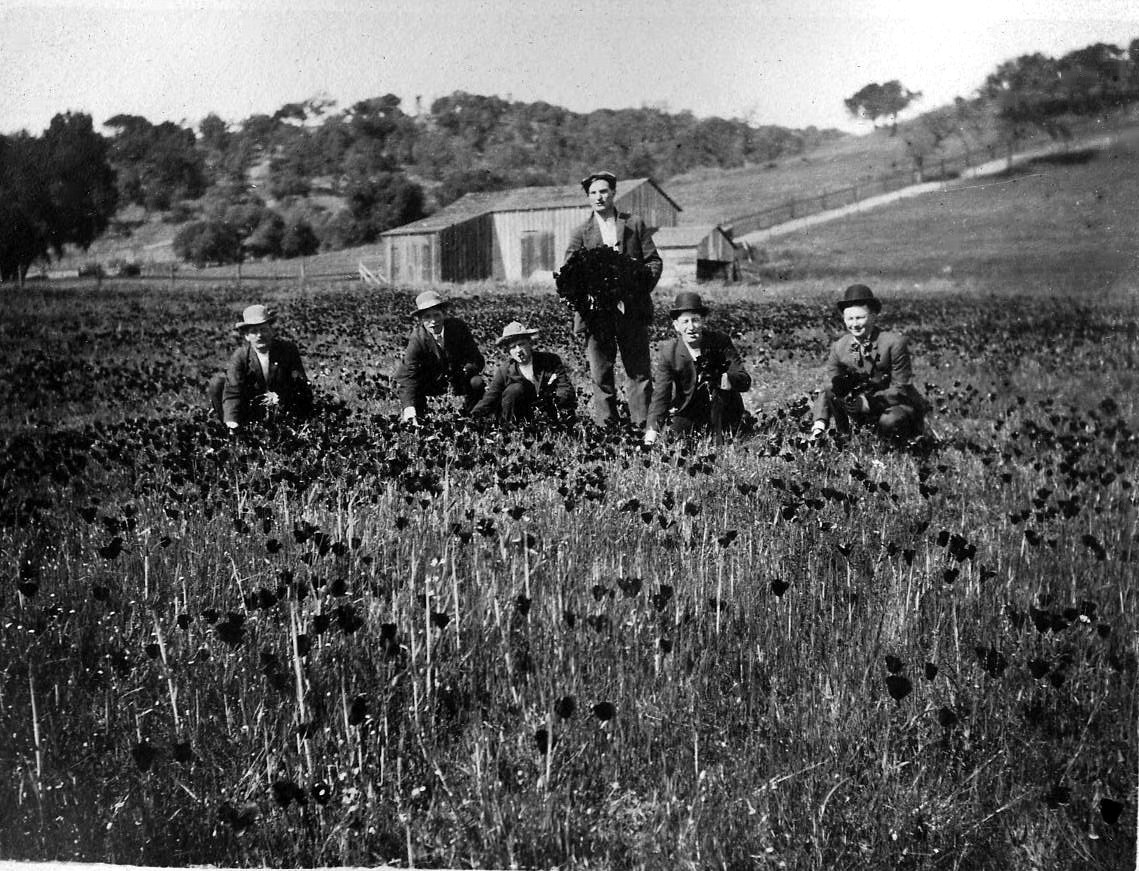 Frank Lang (standing) Flower Harvest.jpg