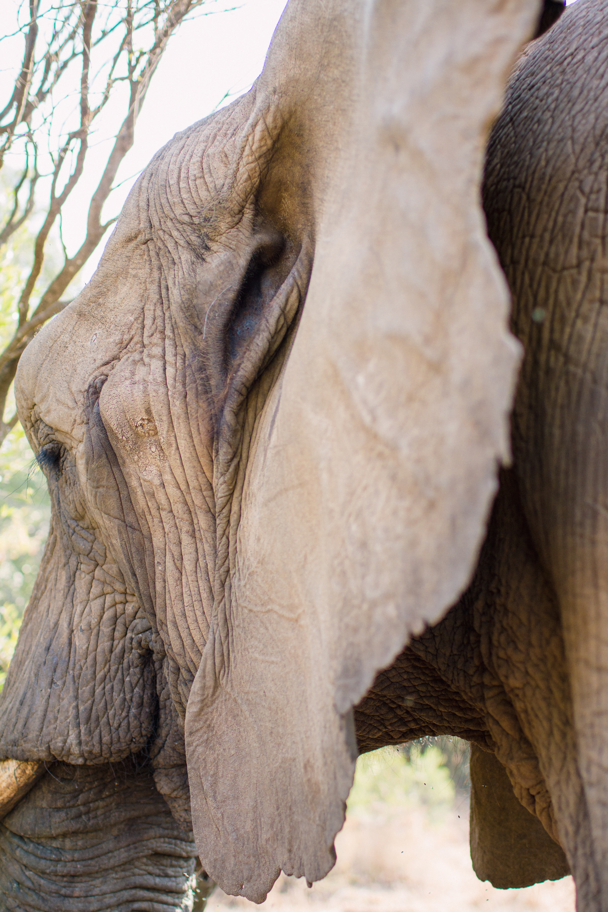 genteelbeasts-dustanddreamsphotography-photography-southafrica-unearthing.tc-8.jpg