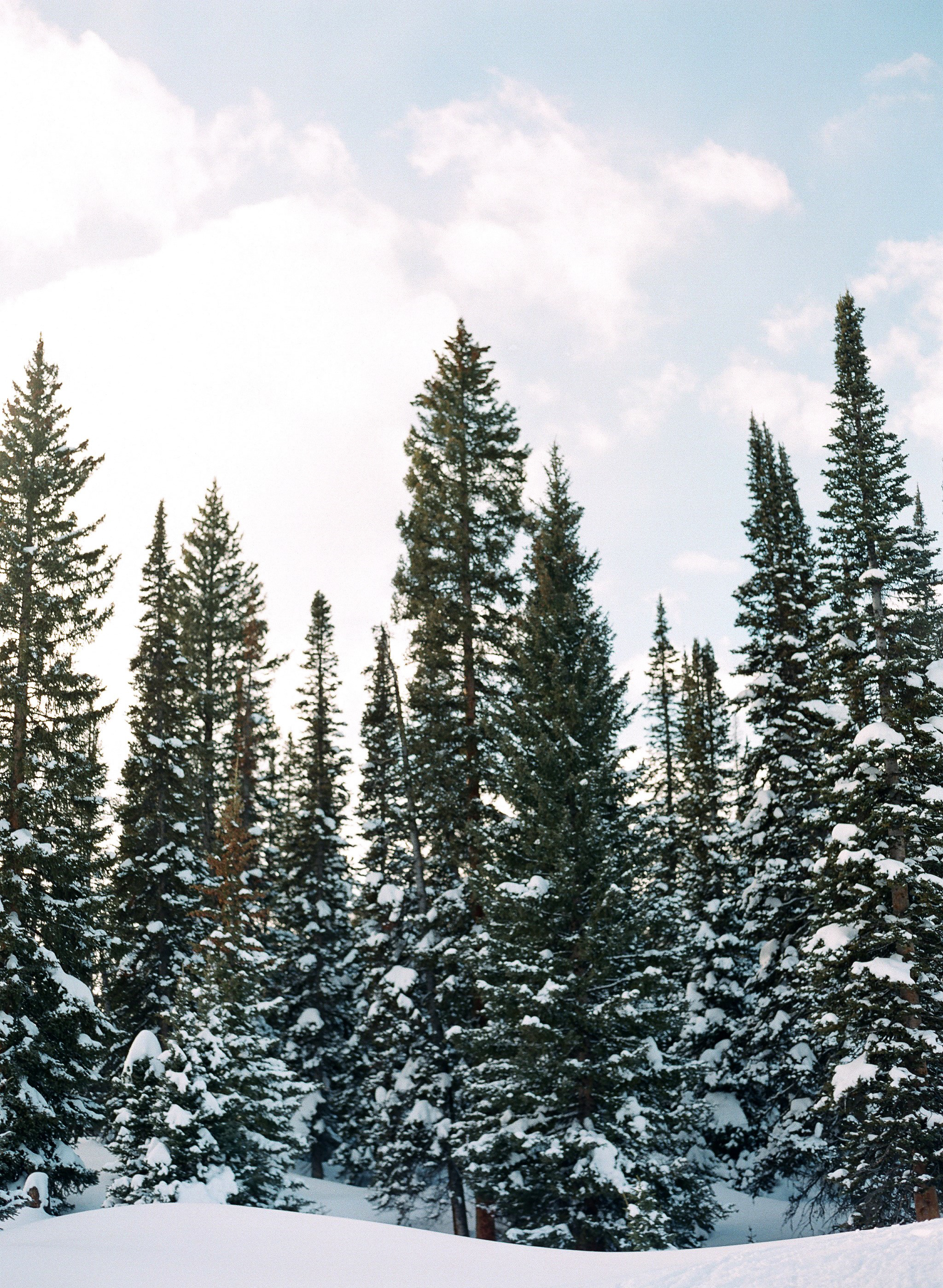 lauramurray-travel-destinationphotography-creativetravel-artists-filmphotography-unearthingtc-trees-snow-pinetrees-snowcappedtrees.jpg
