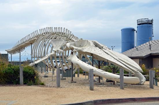 seymour marine discovery center.jpg