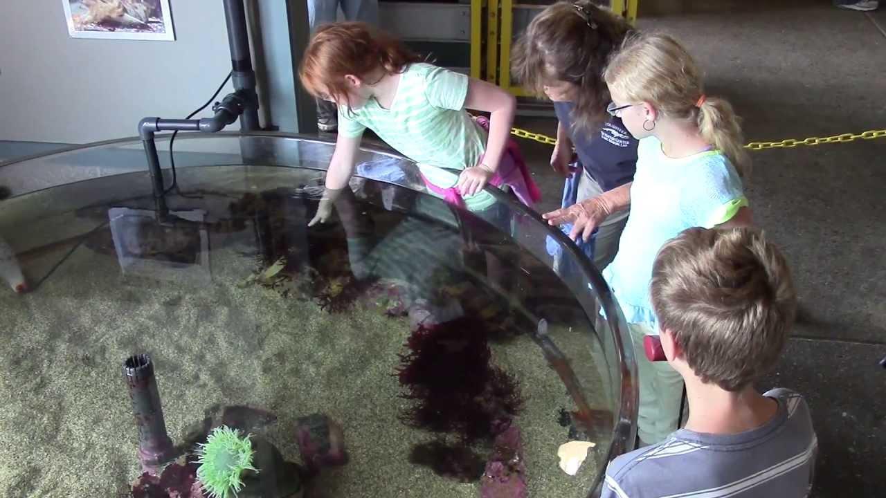 seymour marine discovery center 2.jpg