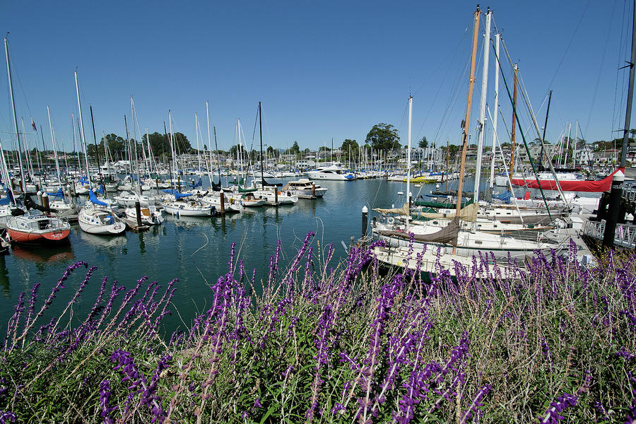 Santa Cruz Yacht Harbor.jpg