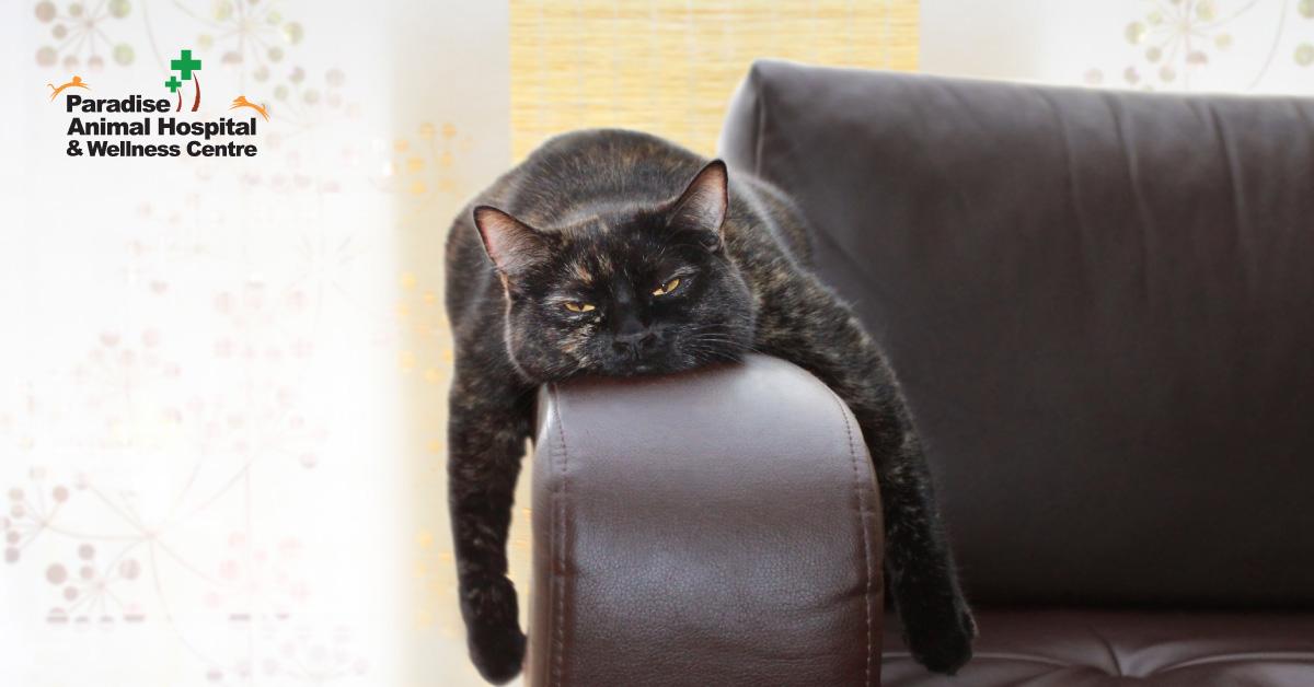 436506_paradise animal hospital - fat cats for blog_bored cats1_082919.jpg