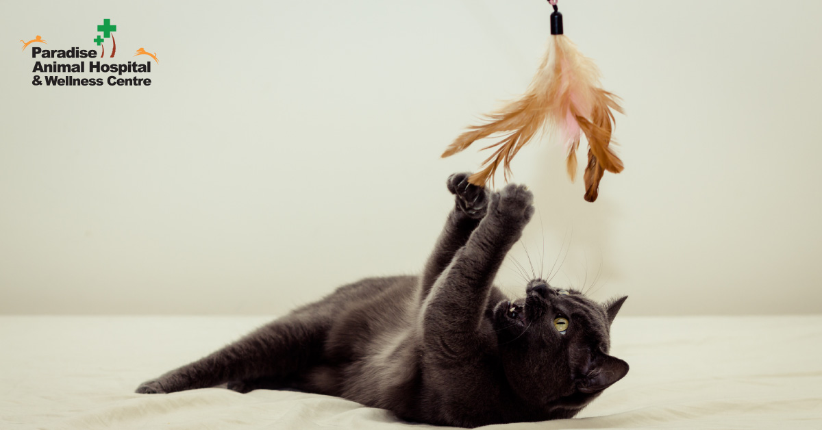 436506_paradise animal hospital - fat cats for blog_Feather toys_082919.jpg