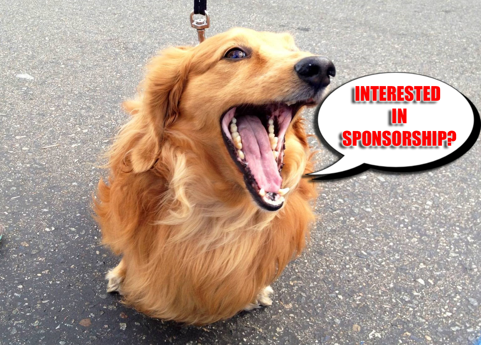 sponsorship dog.jpg