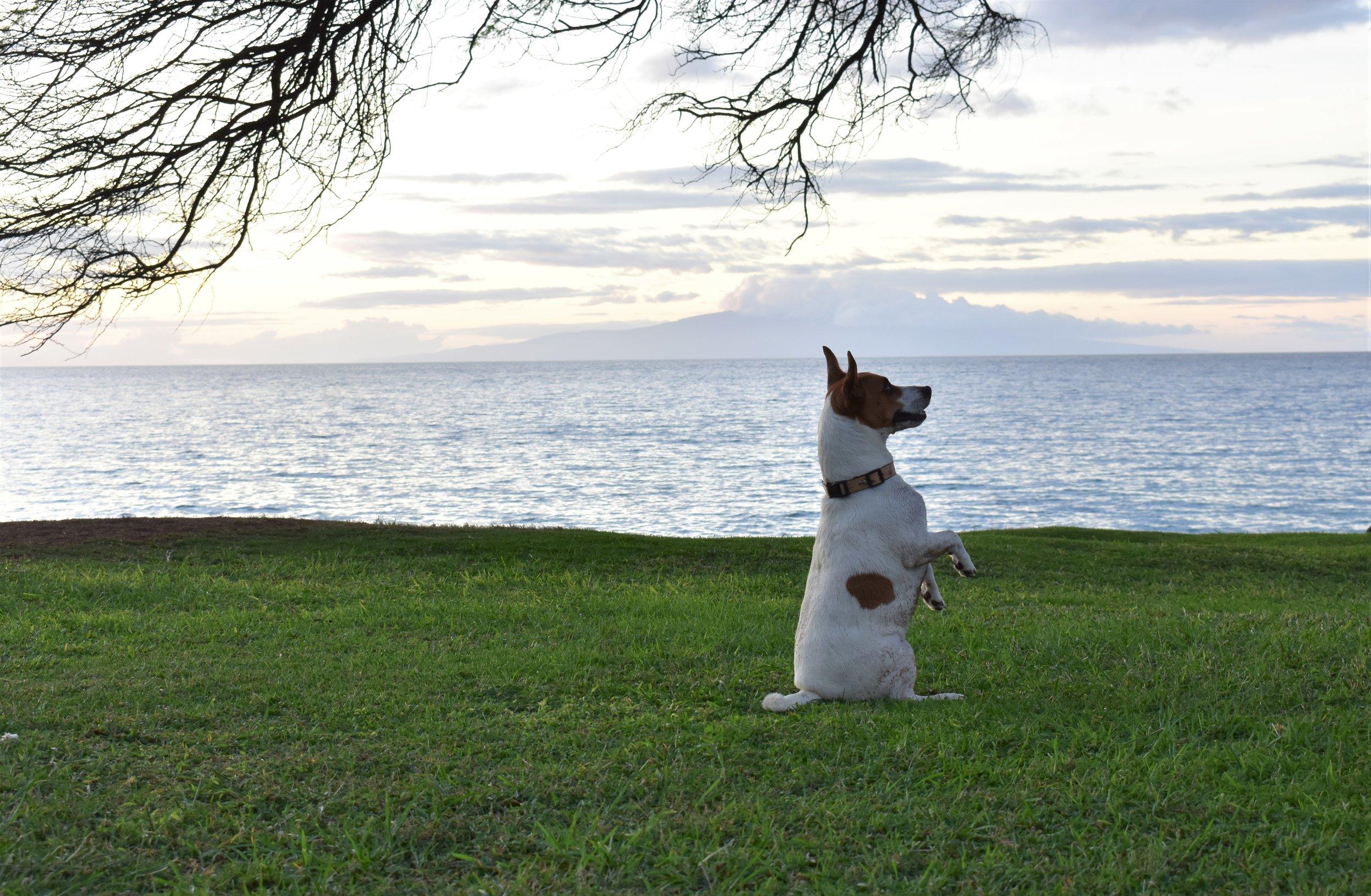 Kamaole Beach Park Maui (9).JPG